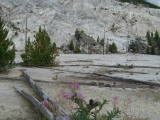 Yellowstone National Park 2006: Mother Nature's Best Creation