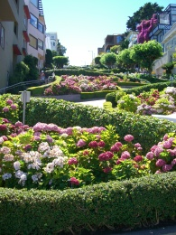 Lombard St in San Francisco, CA