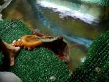 Oregon Coast: From Agates toOctopus